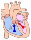 Сердечный цикл и его фазы, таблица